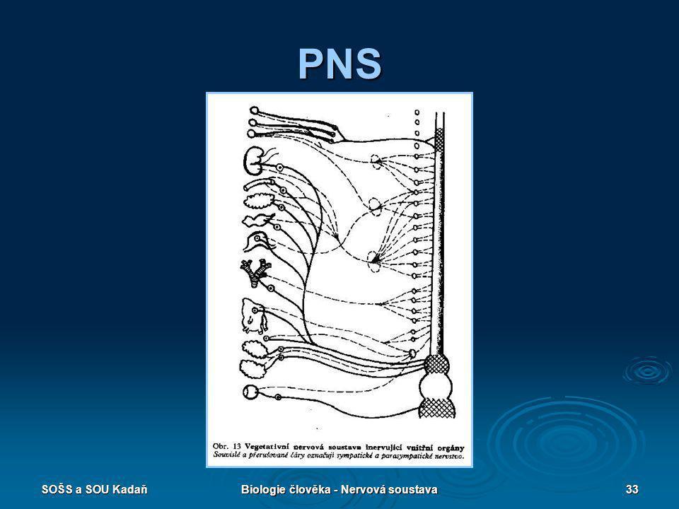 SOŠS a SOU KadaňBiologie člověka - Nervová soustava33 PNS