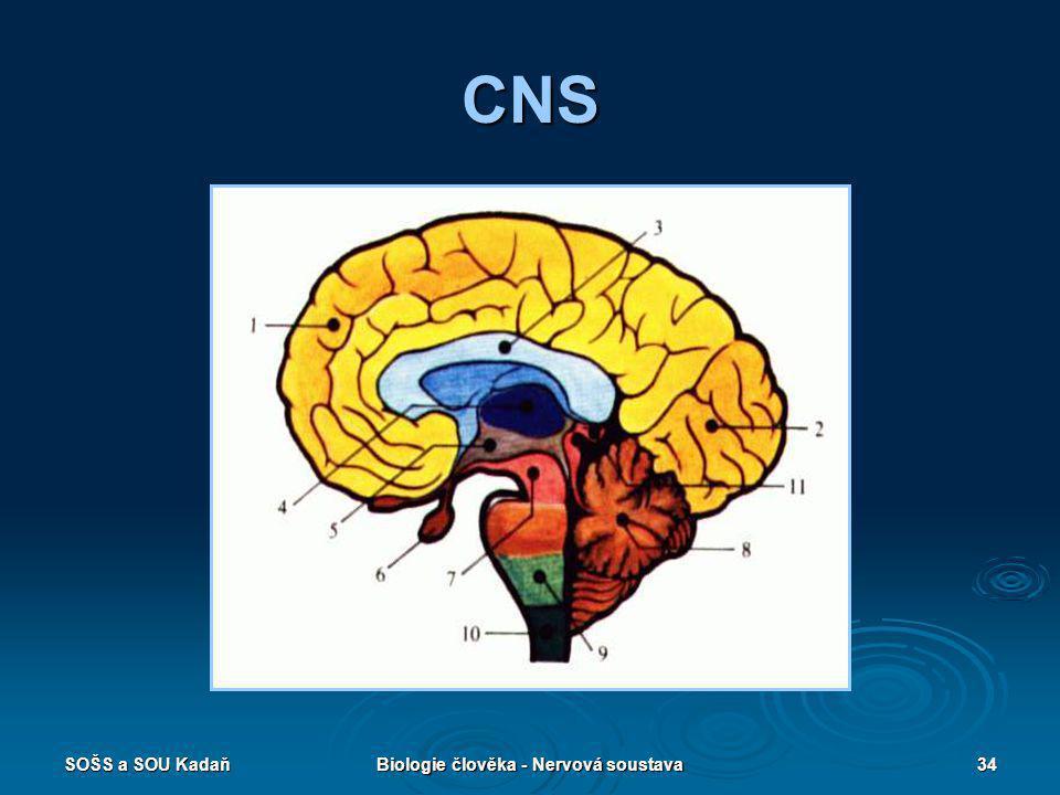 SOŠS a SOU KadaňBiologie člověka - Nervová soustava34 CNS