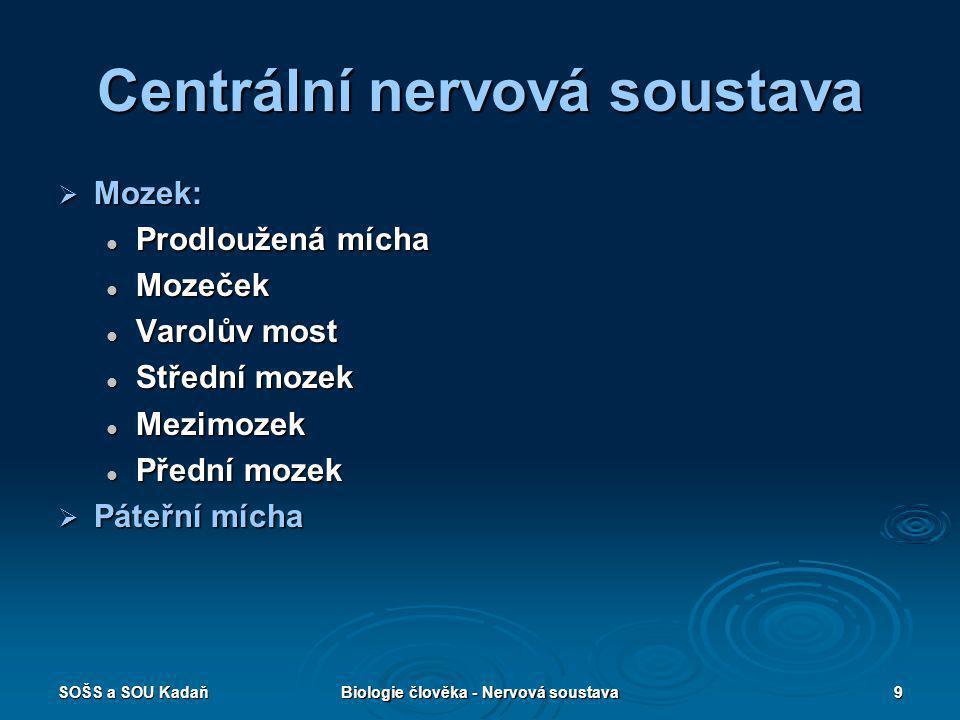 SOŠS a SOU KadaňBiologie člověka - Nervová soustava9 Centrální nervová soustava  Mozek: Prodloužená mícha Prodloužená mícha Mozeček Mozeček Varolův m
