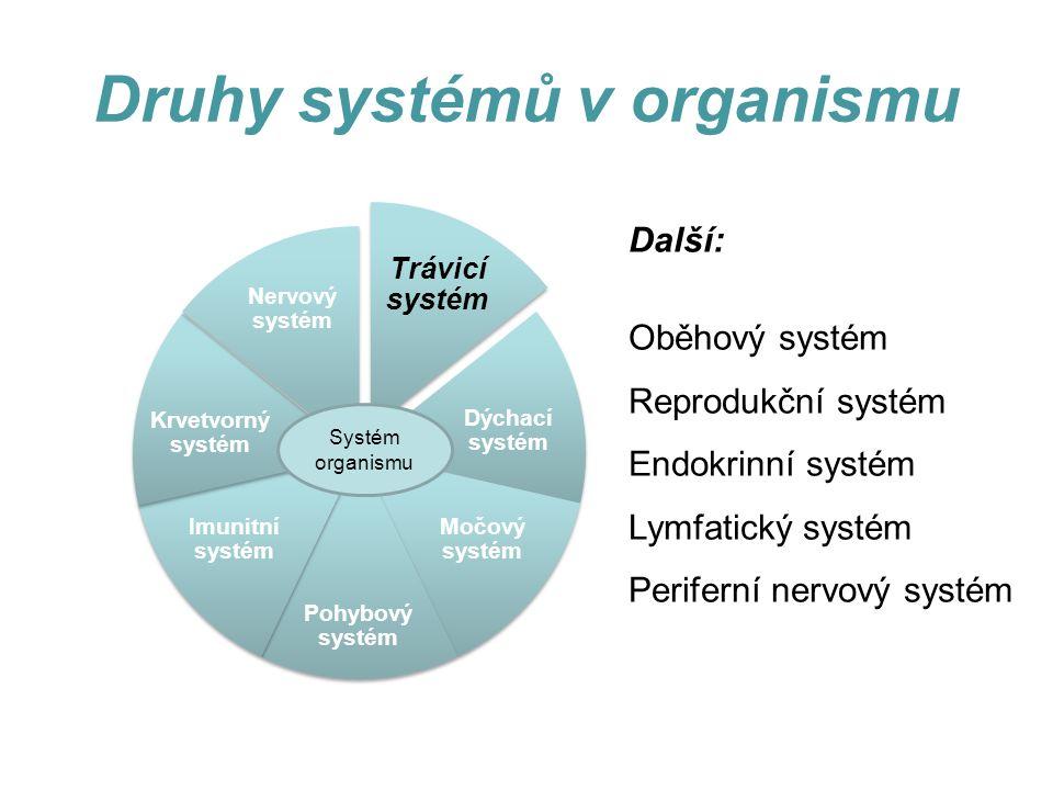 Druhy systémů v organismu Další: Oběhový systém Reprodukční systém Endokrinní systém Lymfatický systém Periferní nervový systém Trávicí systém Dýchací