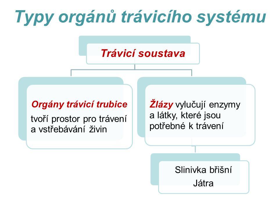 Typy orgánů trávicího systému Trávicí soustava Orgány trávicí trubice tvoří prostor pro trávení a vstřebávání živin Žlázy vylučují enzymy a látky, kte