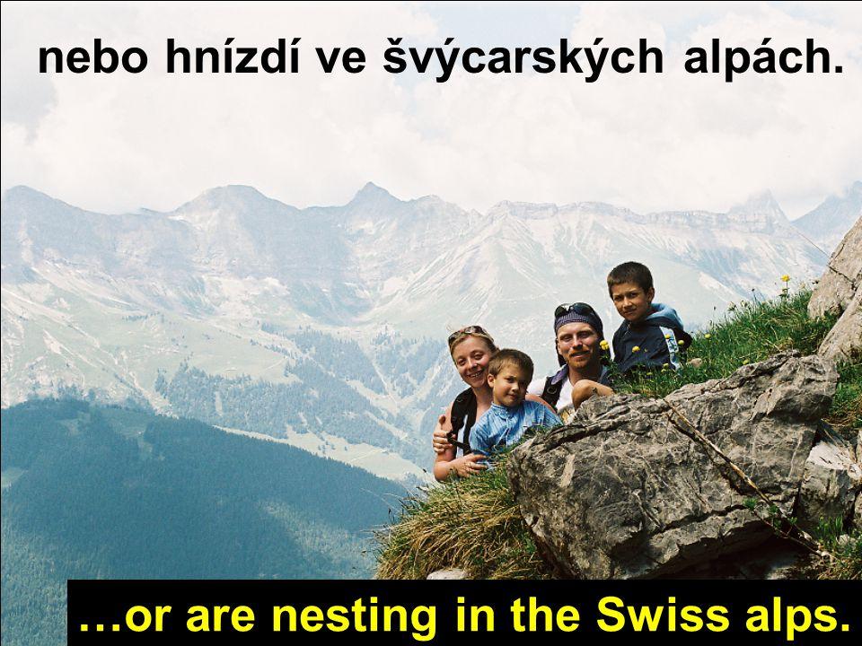 ať už lezou ve skotských highlands, whether they climb in Scottish highlands,