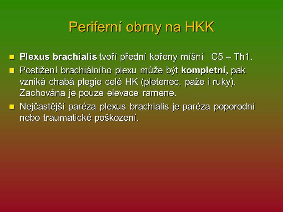 Periferní obrny na HKK Plexus brachialis tvoří přední kořeny míšní C5 – Th1. Plexus brachialis tvoří přední kořeny míšní C5 – Th1. Postižení brachiáln