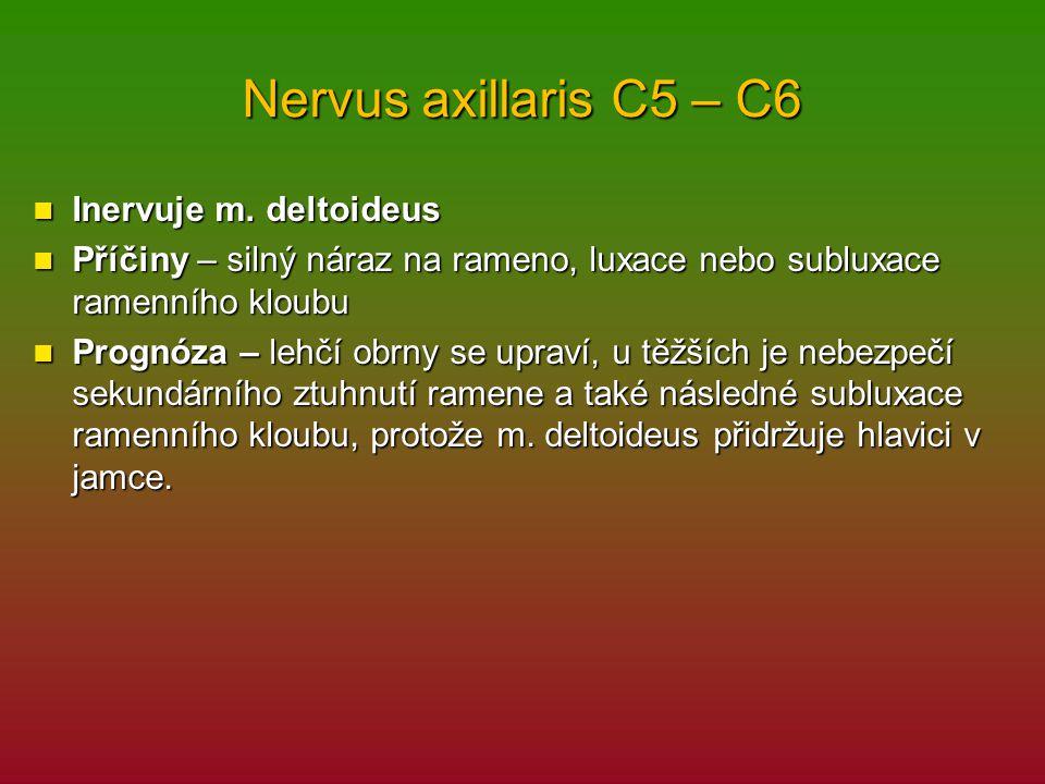 Nervus axillaris C5 – C6 Inervuje m.deltoideus Inervuje m.