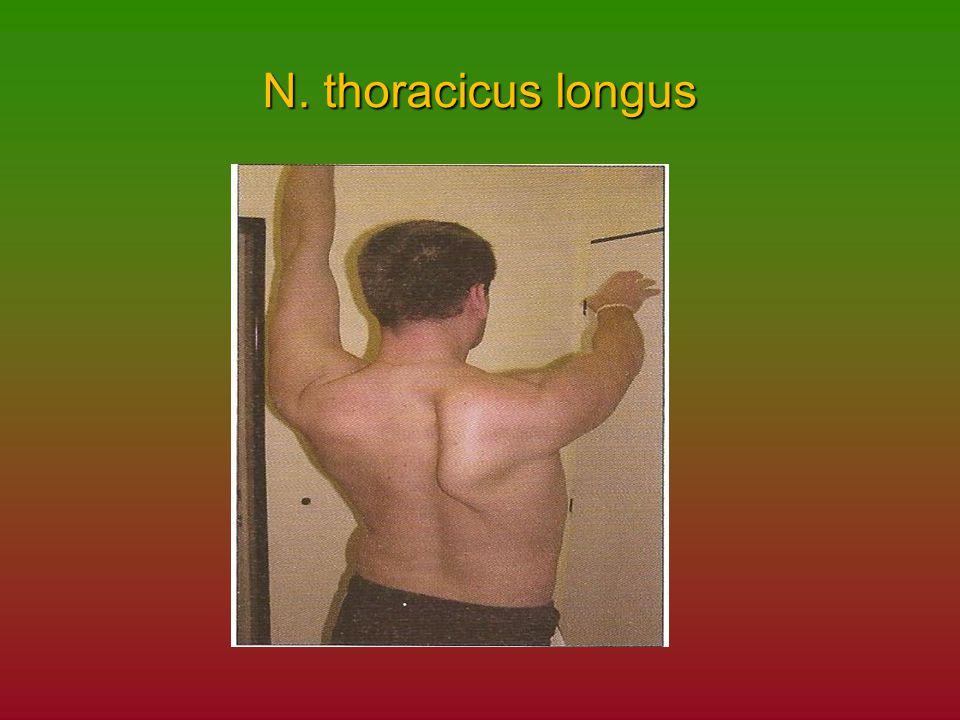 N. thoracicus longus