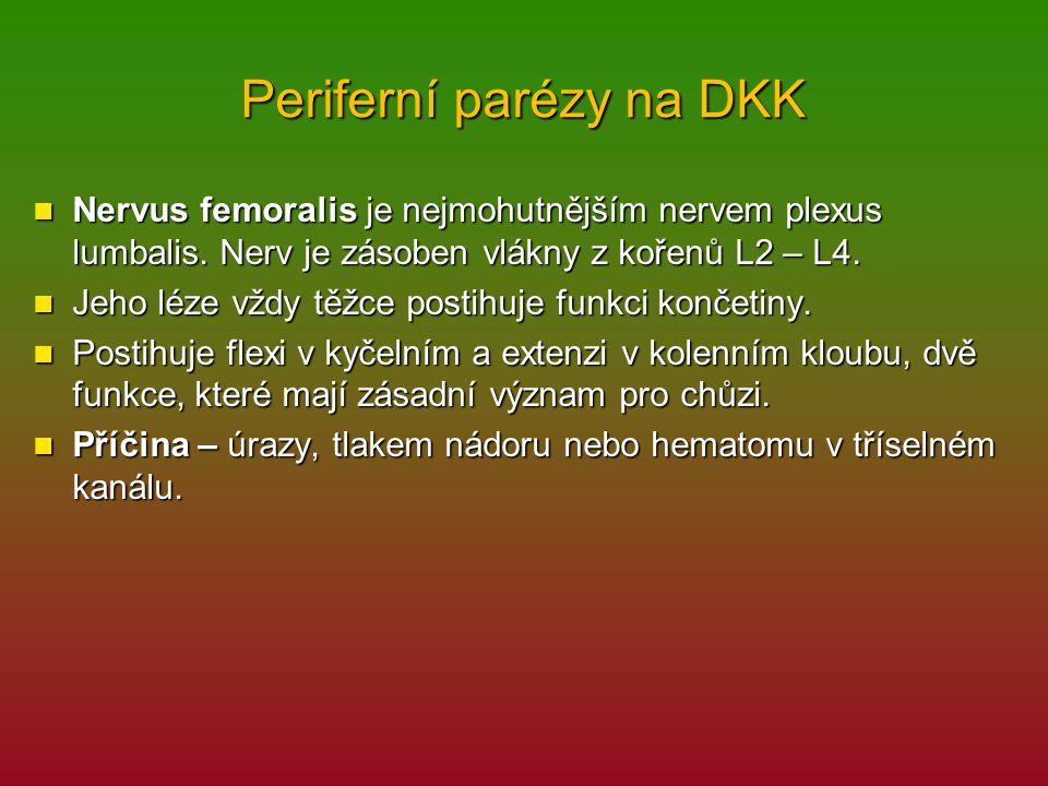 Periferní parézy na DKK Nervus femoralis je nejmohutnějším nervem plexus lumbalis. Nerv je zásoben vlákny z kořenů L2 – L4. Nervus femoralis je nejmoh