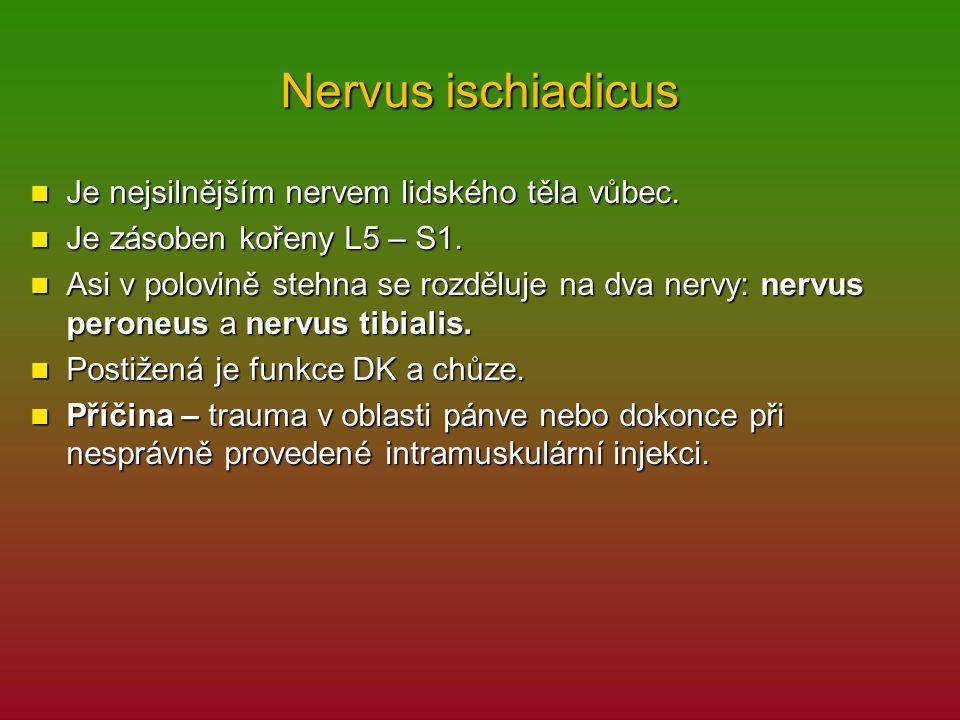 Nervus ischiadicus Je nejsilnějším nervem lidského těla vůbec. Je nejsilnějším nervem lidského těla vůbec. Je zásoben kořeny L5 – S1. Je zásoben kořen