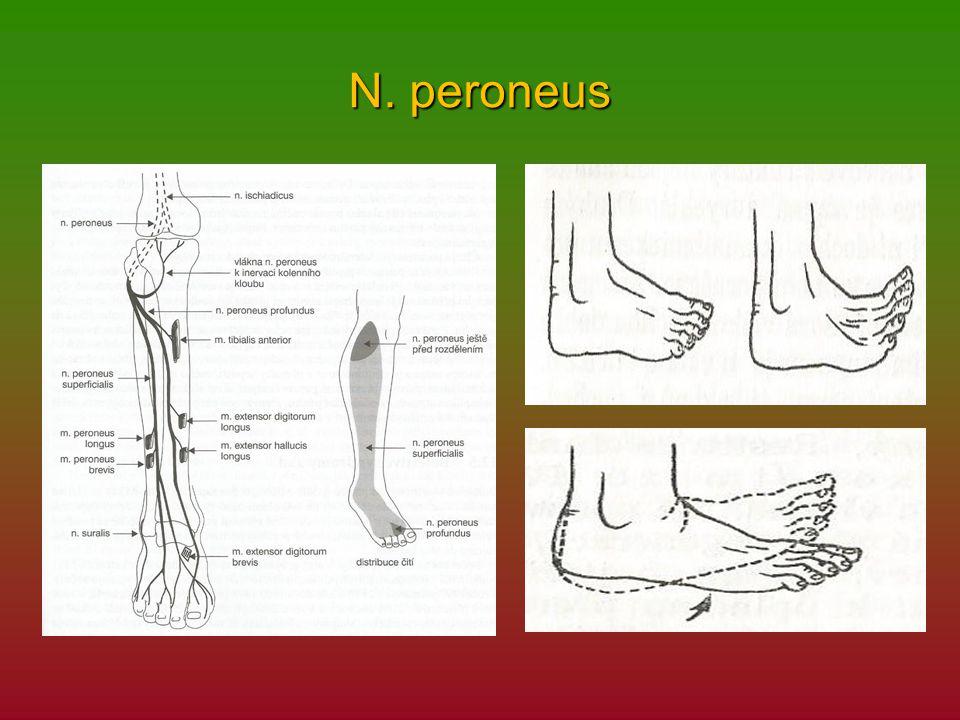 N. peroneus