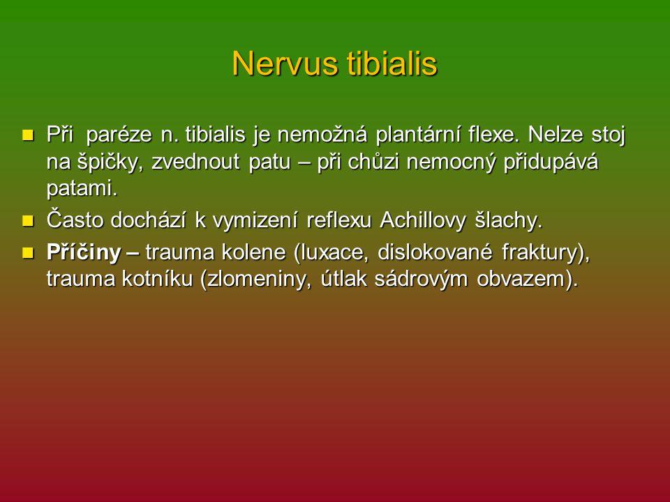 Nervus tibialis Při paréze n. tibialis je nemožná plantární flexe. Nelze stoj na špičky, zvednout patu – při chůzi nemocný přidupává patami. Při paréz