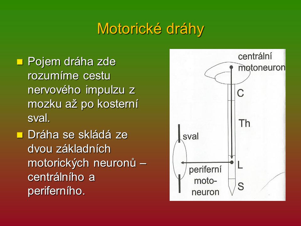 Motorické dráhy Pojem dráha zde rozumíme cestu nervového impulzu z mozku až po kosterní sval. Pojem dráha zde rozumíme cestu nervového impulzu z mozku