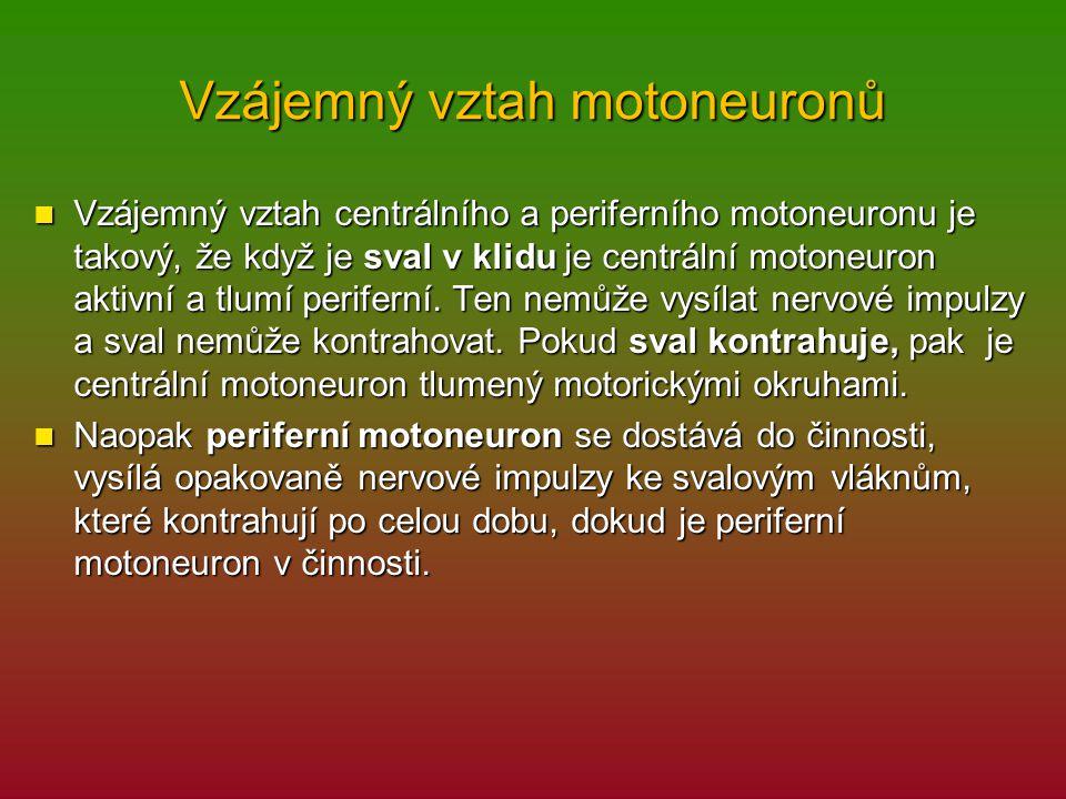 Vzájemný vztah motoneuronů Vzájemný vztah centrálního a periferního motoneuronu je takový, že když je sval v klidu je centrální motoneuron aktivní a tlumí periferní.