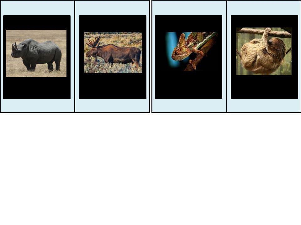 левбуйволслонгорилла зебра бегемоткенгуругазель