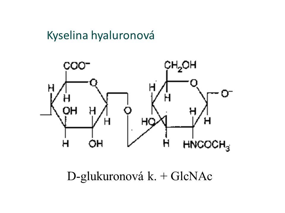 D-glukuronová k. + GlcNAc Kyselina hyaluronová