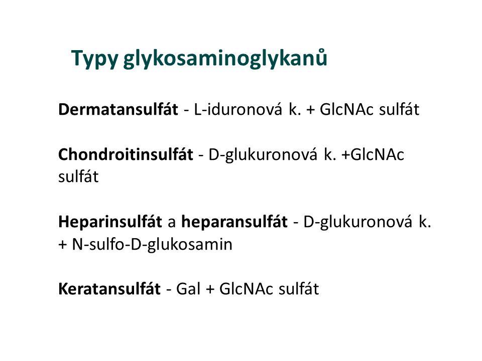 Dermatansulfát - L-iduronová k. + GlcNAc sulfát Chondroitinsulfát - D-glukuronová k. +GlcNAc sulfát Heparinsulfát a heparansulfát - D-glukuronová k. +