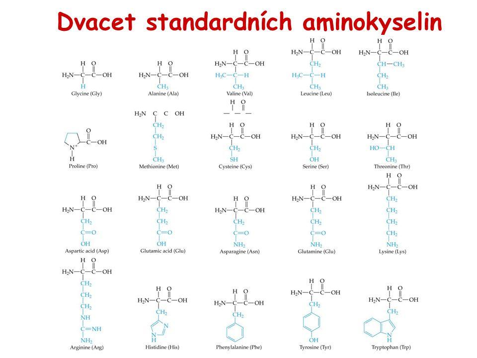 Dvacet standardních aminokyselin
