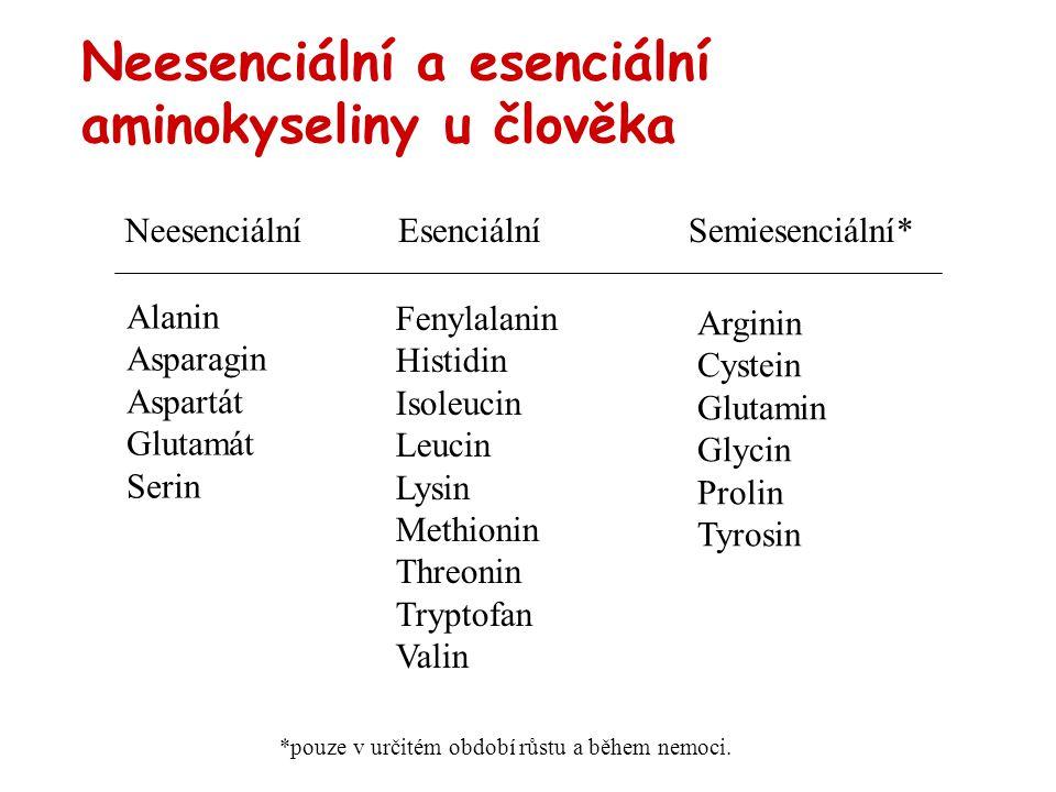 Neesenciální a esenciální aminokyseliny u člověka NeesenciálníEsenciálníSemiesenciální* Alanin Asparagin Aspartát Glutamát Serin Fenylalanin Histidin