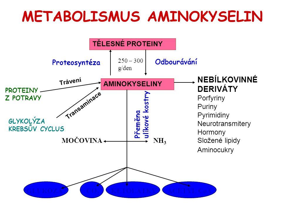 METABOLISMUS AMINOKYSELIN PROTEINY Z POTRAVY NEBÍLKOVINNÉ DERIVÁTY Porfyriny Puriny Pyrimidiny Neurotransmitery Hormony Složené lipidy Aminocukry TĚLE