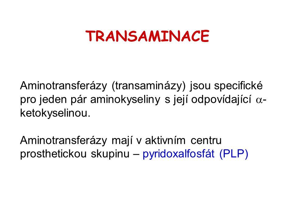 Aminotransferázy (transaminázy) jsou specifické pro jeden pár aminokyseliny s její odpovídající  - ketokyselinou. Aminotransferázy mají v aktivním ce