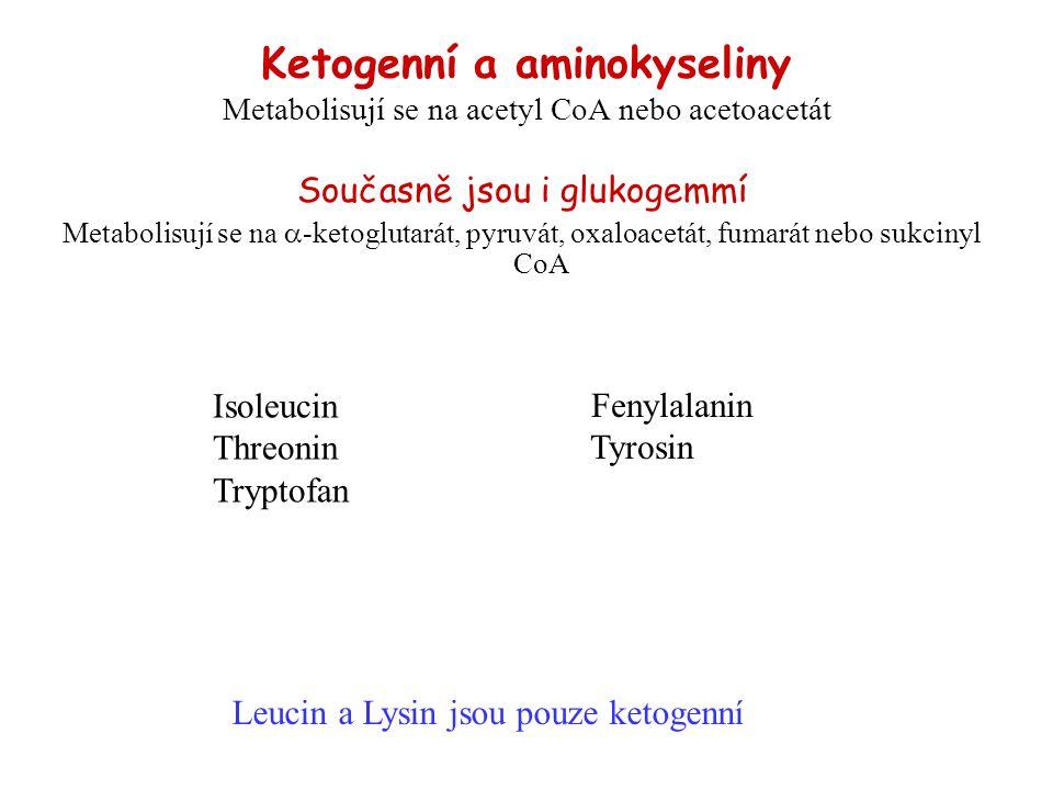 Ketogenní a aminokyseliny Metabolisují se na acetyl CoA nebo acetoacetát Současně jsou i glukogemmí Metabolisují se na  -ketoglutarát, pyruvát, oxalo