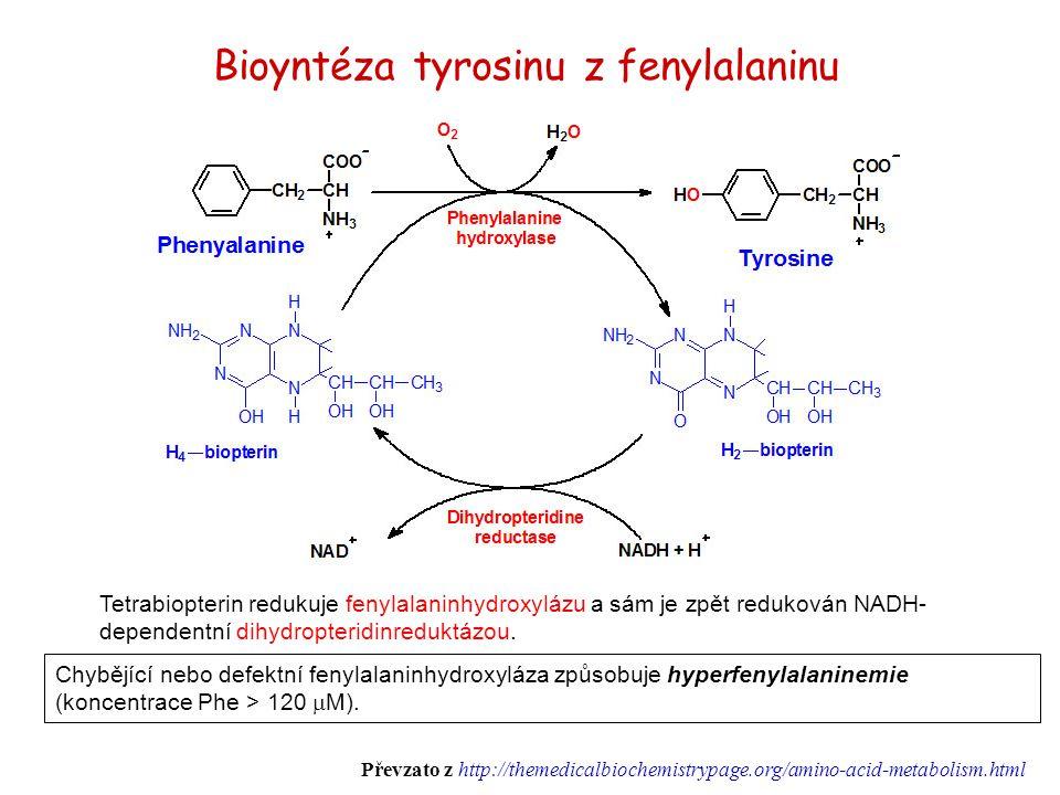 Bioyntéza tyrosinu z fenylalaninu Tetrabiopterin redukuje fenylalaninhydroxylázu a sám je zpět redukován NADH- dependentní dihydropteridinreduktázou.
