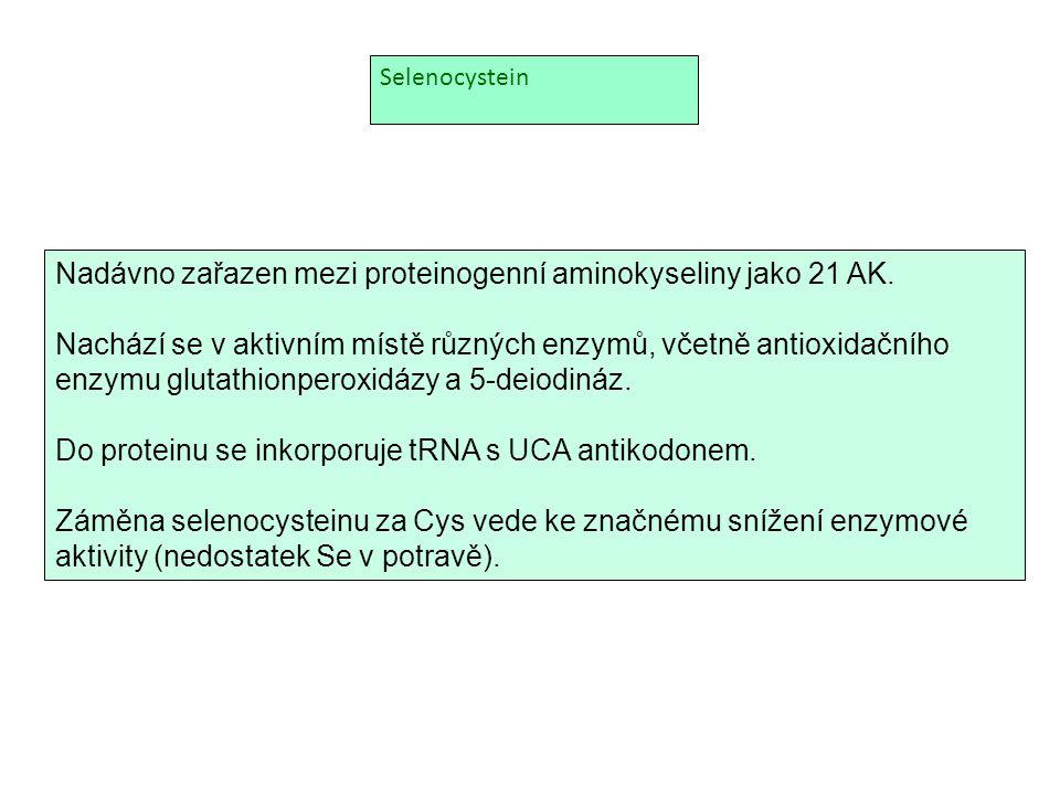 Selenocystein Nadávno zařazen mezi proteinogenní aminokyseliny jako 21 AK. Nachází se v aktivním místě různých enzymů, včetně antioxidačního enzymu gl