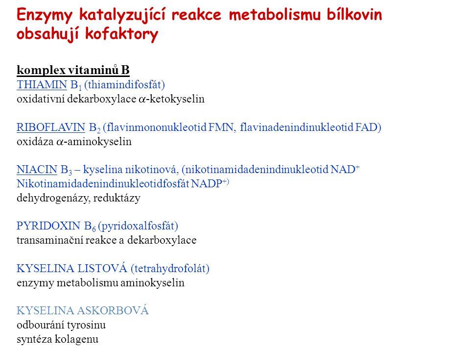 Enzymy katalyzující reakce metabolismu bílkovin obsahují kofaktory komplex vitaminů B THIAMIN B 1 (thiamindifosfát) oxidativní dekarboxylace  -ketoky