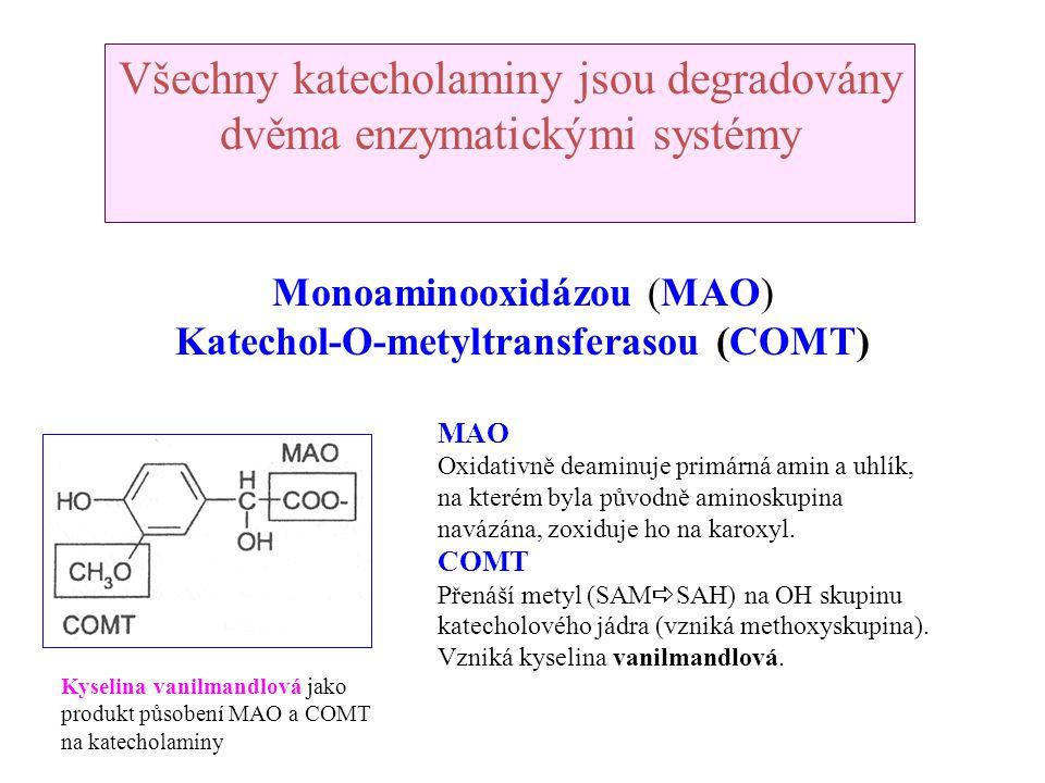 Monoaminooxidázou (MAO) Katechol-O-metyltransferasou (COMT) Všechny katecholaminy jsou degradovány dvěma enzymatickými systémy MAO Oxidativně deaminuj