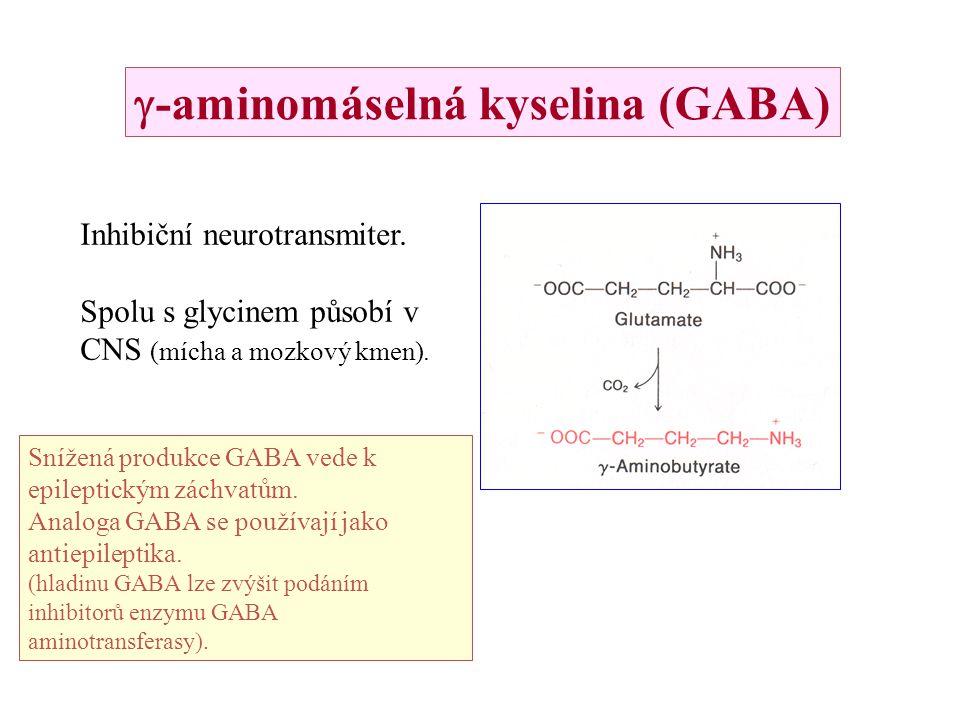 -aminomáselná kyselina (GABA) Inhibiční neurotransmiter. Spolu s glycinem působí v CNS (mícha a mozkový kmen). Snížená produkce GABA vede k epilepti