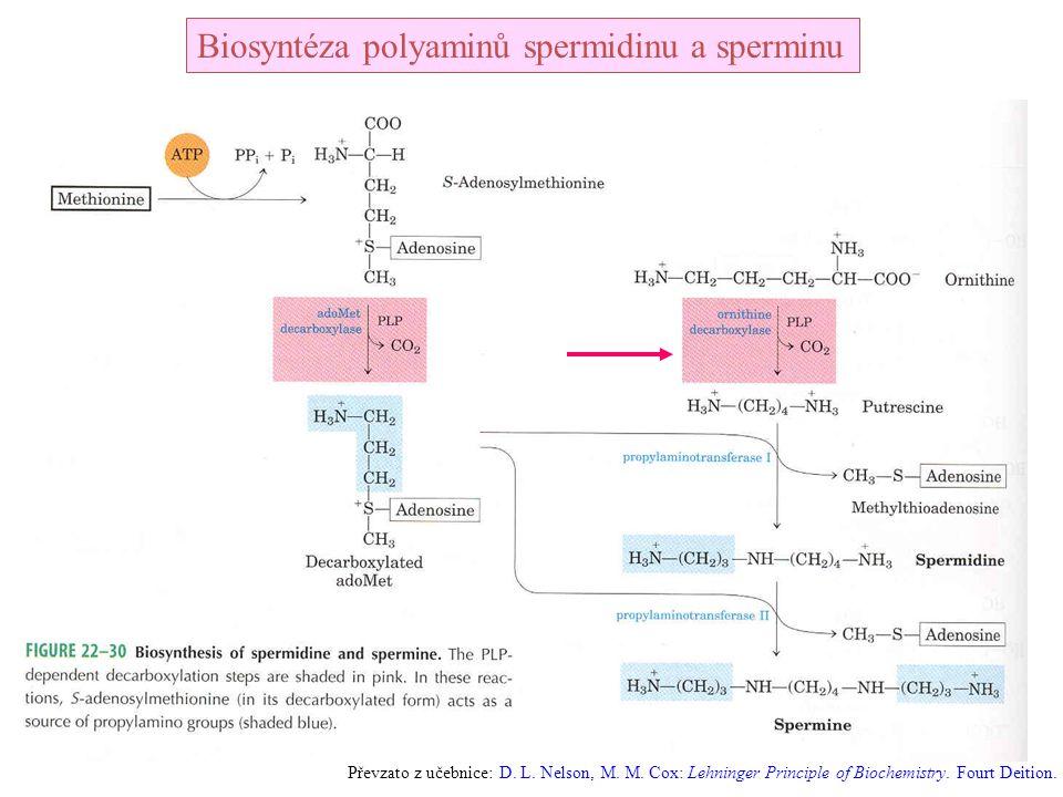 Biosyntéza polyaminů spermidinu a sperminu Převzato z učebnice: D. L. Nelson, M. M. Cox: Lehninger Principle of Biochemistry. Fourt Deition.