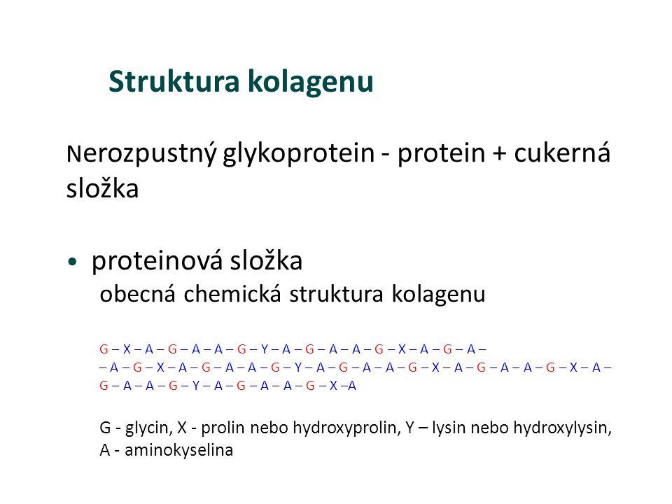 N erozpustný glykoprotein - protein + cukerná složka proteinová složka obecná chemická struktura kolagenu G – X – A – G – A – A – G – Y – A – G – A –