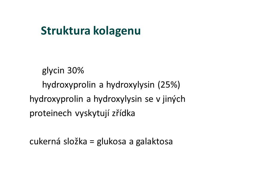 glycin 30% hydroxyprolin a hydroxylysin (25%) hydroxyprolin a hydroxylysin se v jiných proteinech vyskytují zřídka cukerná složka = glukosa a galaktos