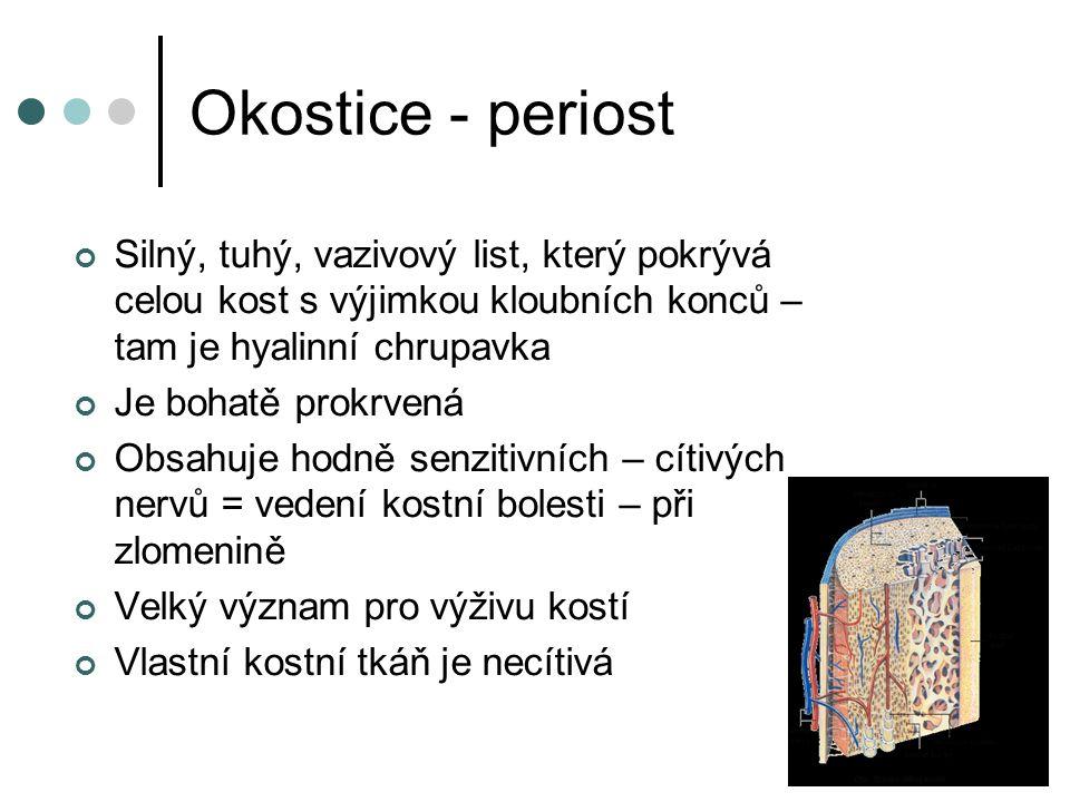 Okostice - periost Silný, tuhý, vazivový list, který pokrývá celou kost s výjimkou kloubních konců – tam je hyalinní chrupavka Je bohatě prokrvená Obs