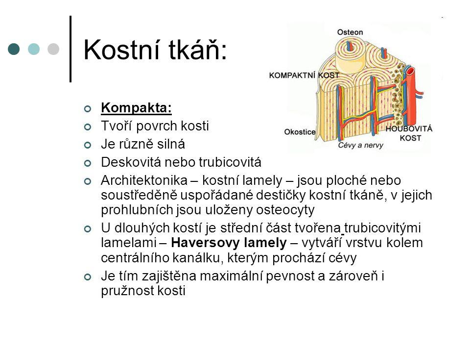 Kostní tkáň: Kompakta: Tvoří povrch kosti Je různě silná Deskovitá nebo trubicovitá Architektonika – kostní lamely – jsou ploché nebo soustředěně uspo