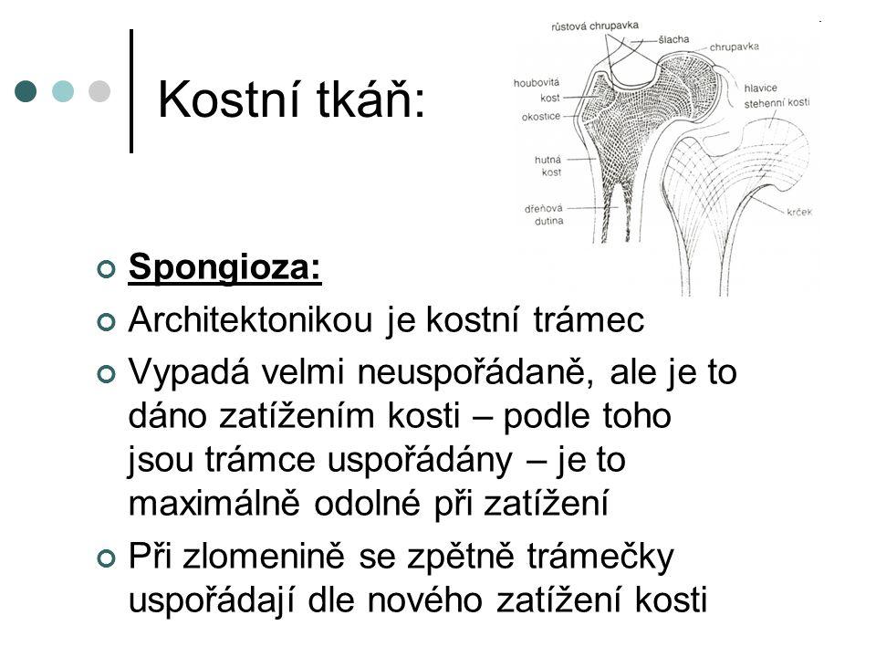 Kostní tkáň: Spongioza: Architektonikou je kostní trámec Vypadá velmi neuspořádaně, ale je to dáno zatížením kosti – podle toho jsou trámce uspořádány