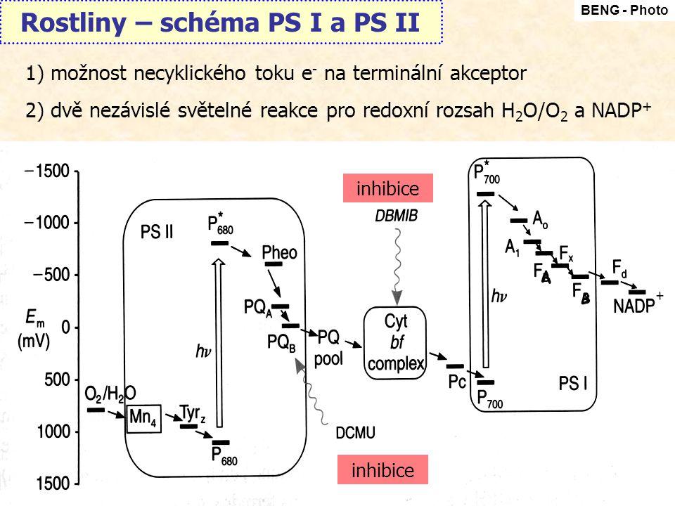 Rostliny – schéma PS I a PS II BENG - Photo 1)možnost necyklického toku e - na terminální akceptor 2)dvě nezávislé světelné reakce pro redoxní rozsah H 2 O/O 2 a NADP + inhibice