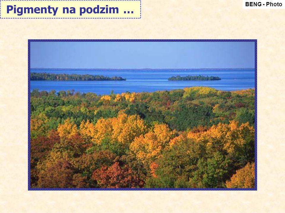 BENG - Photo Pigmenty na podzim …