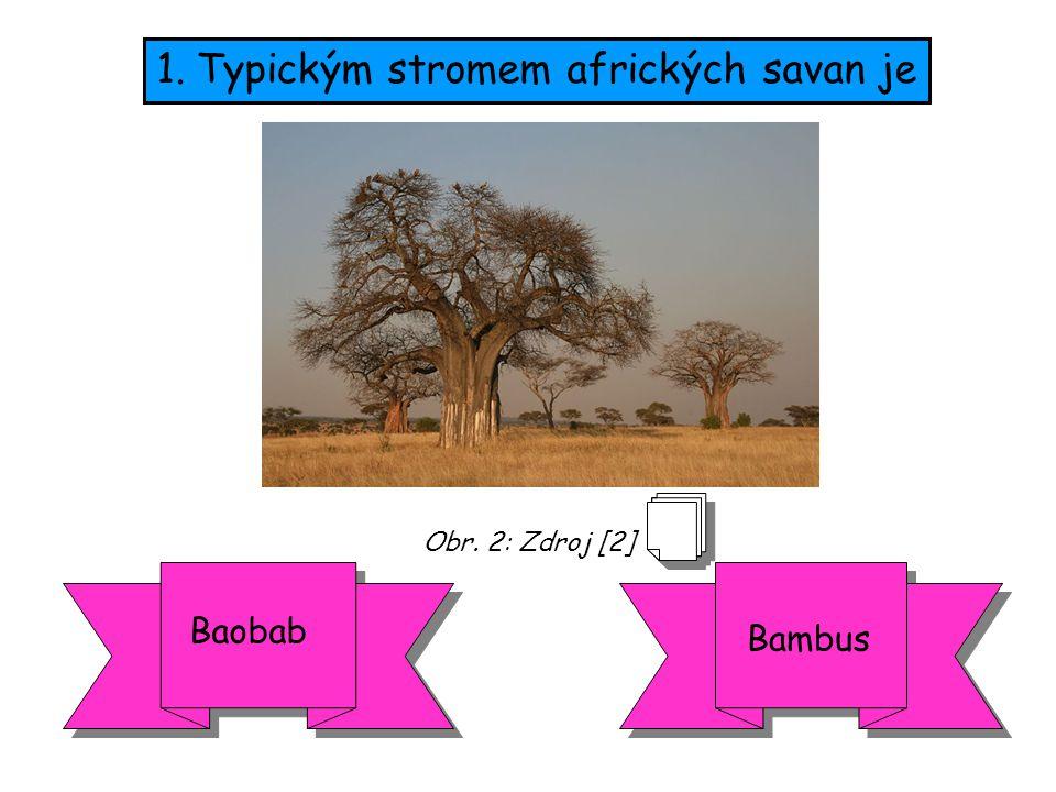 1.Typickým stromem afrických savan je Baobab Bambus Obr. 2: Zdroj [2]