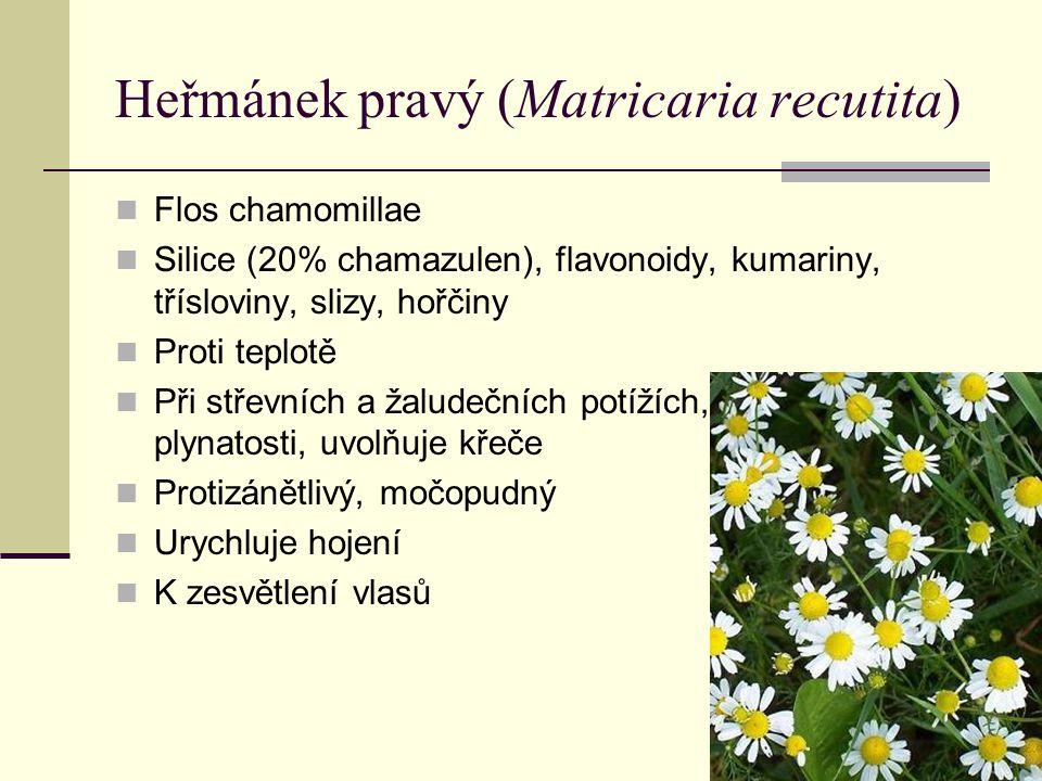 Heřmánek pravý (Matricaria recutita) Flos chamomillae Silice (20% chamazulen), flavonoidy, kumariny, třísloviny, slizy, hořčiny Proti teplotě Při stře