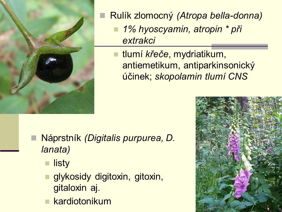 Rulík zlomocný (Atropa bella-donna) 1% hyoscyamin, atropin * při extrakci tlumí křeče, mydriatikum, antiemetikum, antiparkinsonický účinek; skopolamin