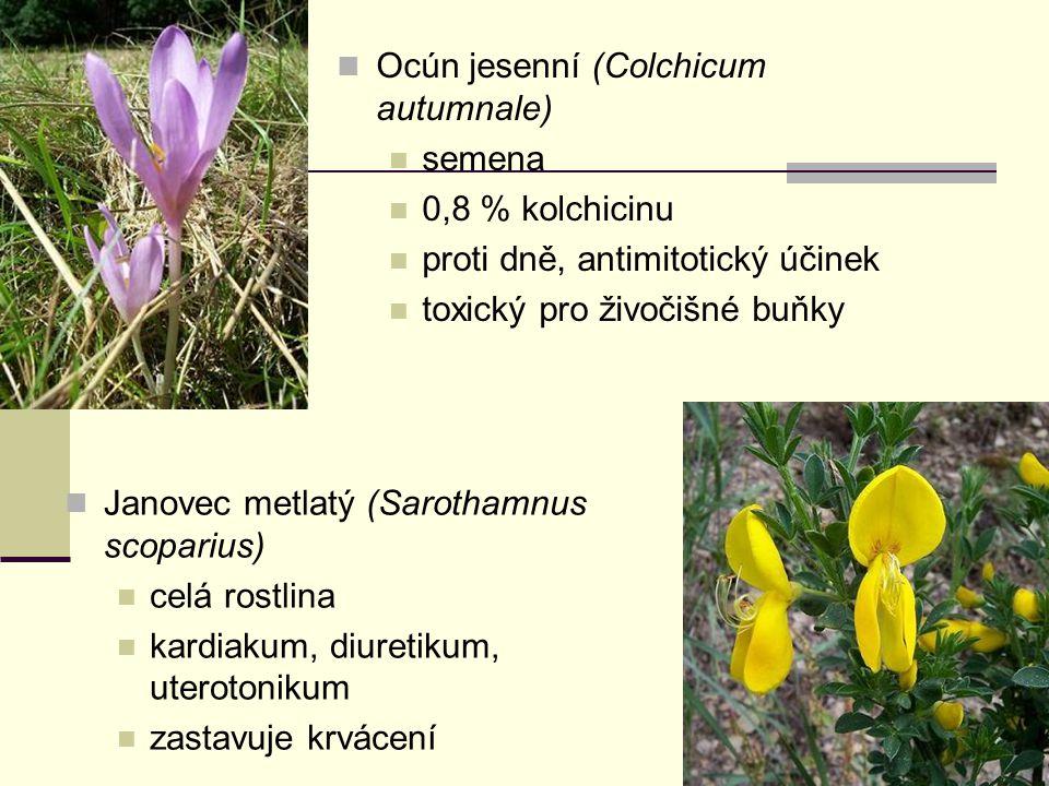 Ocún jesenní (Colchicum autumnale) semena 0,8 % kolchicinu proti dně, antimitotický účinek toxický pro živočišné buňky Janovec metlatý (Sarothamnus sc