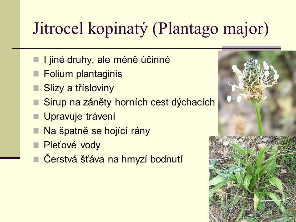 Bez černý (Sambucus nigra) Kůra a listy jedovaté Flos sambuci Flavonoidy, silice, třísloviny, organické kyseliny, sliz Diuretikum – vyvolává pocení, snižuje horečku, mírně projímavý, podporuje vykašlávání Fructus sambuci rutin, anthokyany, vit.