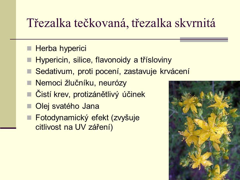 Třezalka tečkovaná, třezalka skvrnitá Herba hyperici Hypericin, silice, flavonoidy a třísloviny Sedativum, proti pocení, zastavuje krvácení Nemoci žlu