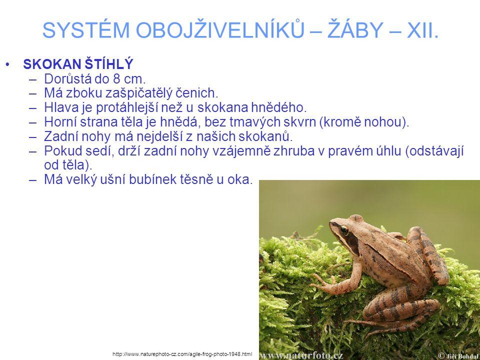 SYSTÉM OBOJŽIVELNÍKŮ – ŽÁBY – XII. SKOKAN ŠTÍHLÝ –Dorůstá do 8 cm.