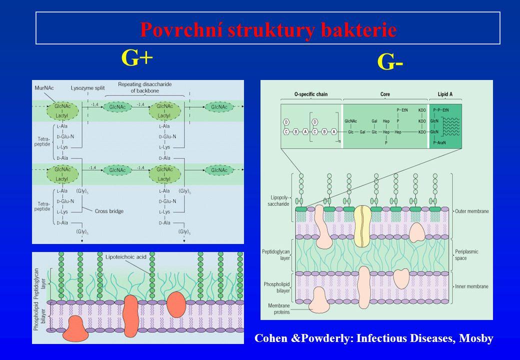 Povrchní struktury bakterie G+ G- Cohen &Powderly: Infectious Diseases, Mosby