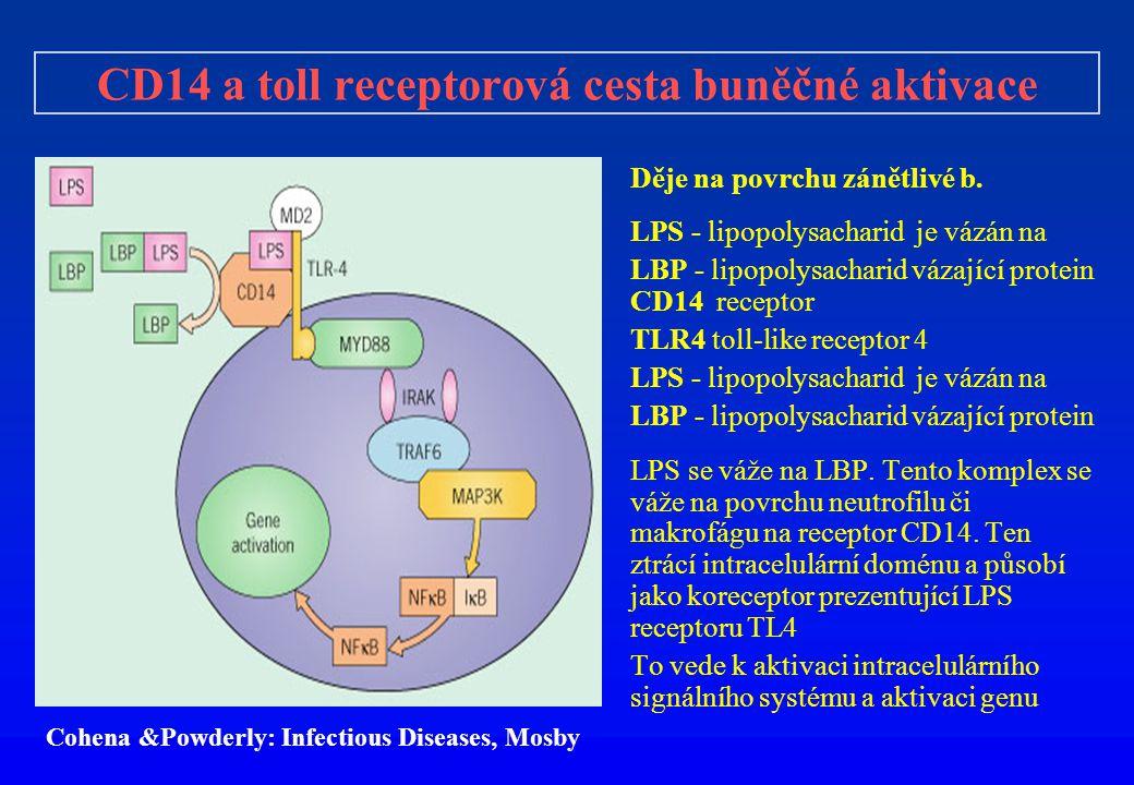CD14 a toll receptorová cesta buněčné aktivace Děje na povrchu zánětlivé b. LPS - lipopolysacharid je vázán na LBP - lipopolysacharid vázající protein