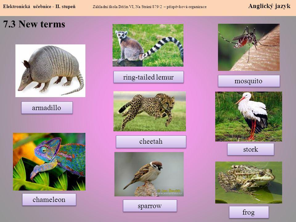 7.3 New terms Elektronická učebnice - II.