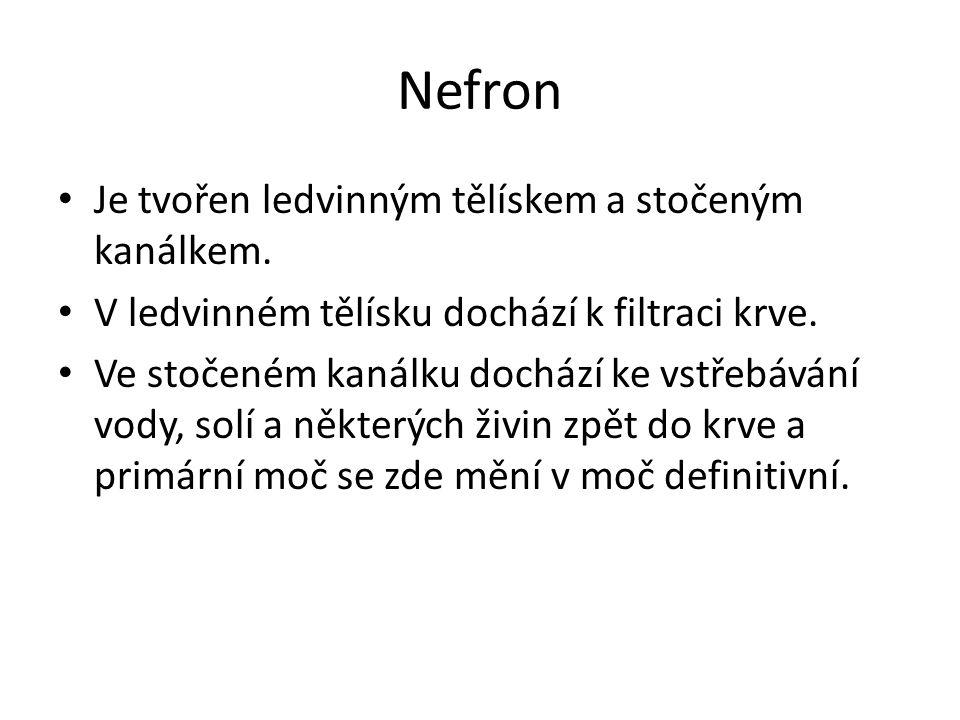 Nefron Je tvořen ledvinným tělískem a stočeným kanálkem. V ledvinném tělísku dochází k filtraci krve. Ve stočeném kanálku dochází ke vstřebávání vody,