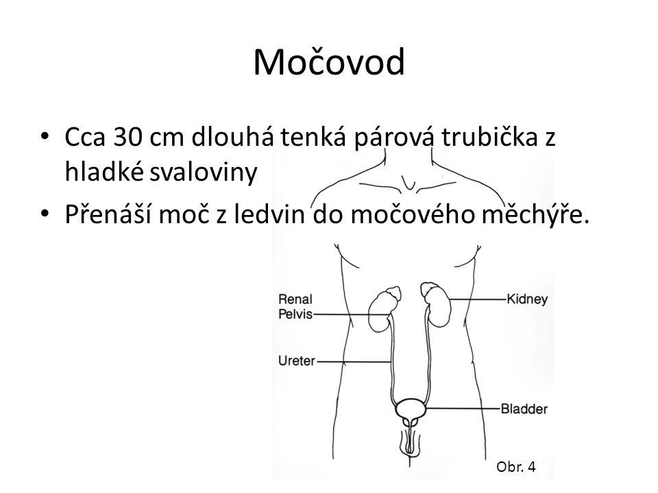 Močovod Cca 30 cm dlouhá tenká párová trubička z hladké svaloviny Přenáší moč z ledvin do močového měchýře. Obr. 4