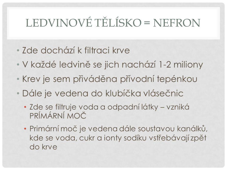 LEDVINOVÉ TĚLÍSKO = NEFRON Zde dochází k filtraci krve V každé ledvině se jich nachází 1-2 miliony Krev je sem přiváděna přívodní tepénkou Dále je ved