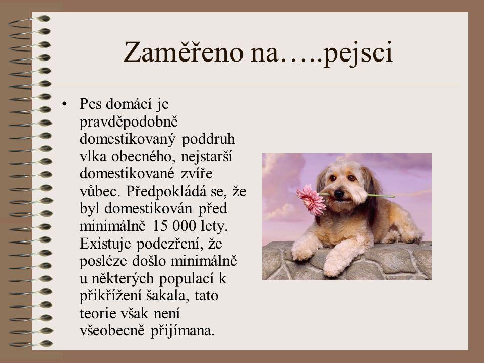 Zaměřeno na…..pejsci Pes domácí je pravděpodobně domestikovaný poddruh vlka obecného, nejstarší domestikované zvíře vůbec. Předpokládá se, že byl dome
